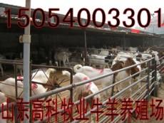 山東正規養殖場菏澤鄆城有賣小羊的嗎