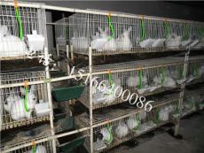 山東肉兔養殖場多嗎