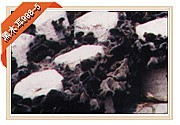 优质黑木耳食用菌二级三级菌种菌包