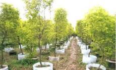 植树袋价格