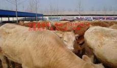 肉牛多少錢一頭洪源肉牛養殖場